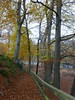 Down to the River (monkeyiron) Tags: birnam perthshire autumn fall path rivertay