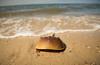 Horseshoe Crab (Grant 1141) Tags: crab crabs virginia cape charles color photography nikon professional d810 70200 2470 28 beach sand marine aquatic ocean water atlantic
