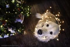 49-52 bright idea (Dave (www.thePhotonWhisperer.com)) Tags:
