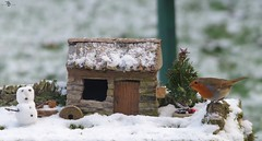christmas robin in snow  with snow man and tree (1) (Simon Dell Photography) Tags: nature simon dell photography wildlife birds snow winter scene small cottage borrower house bird table one kind bespoke robin torkshire old english garden