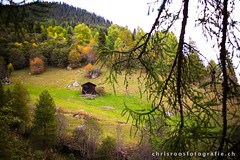 autumn in the alps (chrisroosfotografie) Tags: autumn alps switzerland swiss wallis valais mountains alm color farben herbst fall trees wald green hike forest