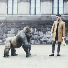 I don't share my bananas (David Olkarny Photography) Tags: davidolkarny olkarny david gorilla bananas