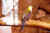 IMG_3226_copy (sinanaydin.net) Tags: eskişehir park hayvanat bahçesi zoo sazova animal