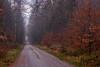 Love will find a way through paths where wolves fear to prey  (Lord Byron) (ralfkai41) Tags: path nebel landschaft woods mist dresdnerheide outdoor wald natur bäume woodlands landscape forest trees weg dawn fog morgendämmerung autumn herbst nature