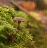 Stand out mushroom (chrisayles78) Tags: mushroom macro macrophotography macrounlimited naturalbokeh bokeh pentaxk70 pentax100mmmacro pentax purple nature naturalworld closeup upclose