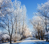 Dazzling White... (Ruth Voorhis) Tags: winter trees branches twigs sky walkway outdoors