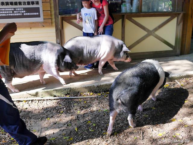埔心農場-2460274