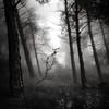 A place to hide III (ilias varelas) Tags: fog forest field blackandwhite bw nature mood light mono monochrome mist mountain landscape ilias varelas greece atmosphere square exposure trees hide woods woodland