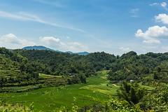 Výhled na rýžová políčka (zcesty) Tags: rýže pole krajina hory vietnam dosvěta lạngsơn vn
