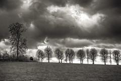 Winterlight (enneafive) Tags: trees winter avenue light clouds grass fujifilm xt2 storm sky nature sun bucolic rural bw monochrome blackandwhite