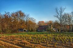 ABANDONED (NC Cigany) Tags: autumn fall rural color harvest tobacco abandoned farm northcarolina