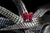 Anstecknadel / pin (ingrid eulenfan) Tags: macromondays makro 90mm anstecknadel stick schmetterling butterfly bänder geschenkband bands pin
