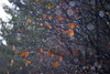 Glitzerbokeh (malp007) Tags: wald woods forest skov nature naturephotography bokeh blatt sheets tree waterdrops tropfen herbst autumn