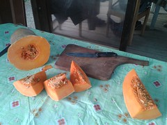 """29.10.2017 Anche noi alla Festa della zucca (1) • <a style=""""font-size:0.8em;"""" href=""""http://www.flickr.com/photos/82334474@N06/39116528181/"""" target=""""_blank"""">View on Flickr</a>"""