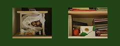 Prompters` & Stage Callers` office before the performance. Left: found a surprise in my Drawer as I wanted to take out the reading light / Right: My Thank Note on Rudi`s Shelf. Überraschung in meiner Lade / Danke Karte in Rudis Fach an Ort und Stelle (hedbavny) Tags: ever clever käse cheese walnus nut nus walnut mailart card karte danke apfel apple red rot orange yellow gelb schrift handschrift green grün tinte ink sackerl nylonsackerl plastiktüte weis white drawer lade shelf fach kasterl kasten buch book heft mappe umschlag textbuch schnellhefter kladde stos stapel flasche thermosflasche postkarte postcard brief letter buchstabe arbeit work dienstzimmer backstage lampe taschenlampe leselicht theater theatre kollege colleague überraschung surprise geschenk present gift wien vienna austria österreich hedbavny ingridhedbavny