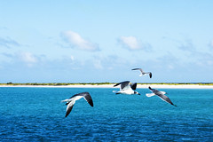 Libertad..!!! (Nita_Fotos) Tags: islatortuga tortugaisland azul blue clouds nubes sand arena trees mar sea caribbeansea marcaribe gaviotas gulls birds venezuela tuniñasalvajedelaselva