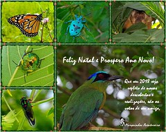 Merry Christmas and Happy New Year 2018! (Marquinhos Aventureiro) Tags: wildlife vida selvagem natureza floresta brasil brazil hx400 marquinhos aventureiro marquinhosaventureiro merry christmas happy new year 2018