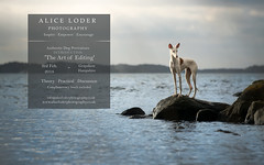 The Art of Editing (INTRO) (Alice Loder) Tags: workshop photography teaching dog dogphotography dogmagazine petportraits