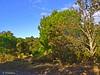 Region of Roussillon / France (Domènec Ventosa Pascual) Tags: francia árboles naturaleza montaña france trees nature highway path montana árbol cielo hierba