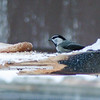 Mountain Chickadee / Poecile gambeli (annkelliott) Tags: alberta canada swofcalgary sheepriverchristmasbirdcount2017 nature wildlife ornithology avian bird chickadee mountainchickadee poecilegambeli paridaefamily whitestripeovereye sideview lowlight feeding birdfeeder snow winter bokeh outdoor 27december2017 fz200 fz2004 annkelliott anneelliott ©anneelliott2017 ©allrightsreserved