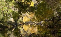Reflected Trees (ksblack99) Tags: sabinocanyon tucson arizona trees reflection stream allfreepicturesmay2018challenge