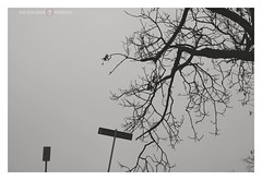 Mercy (GP Camera) Tags: nikond7100 nikonaf35mmf18g silhouettes sky albero tree branches rami roadsigns segnalistradali fog nebbia winter inverno silence silenzio light luce shadows ombre lightness leggerezza backlight controluce textures trame vignetting details dettagli shades sfumature focus messaafuoco whiteframe cornicebianca italy italia piemonte monferrato darktable gimp opensource freesoftware softwarelibero digitalprocessing elaborazionedigitale