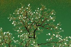 Al viento (seguicollar) Tags: imagencreativa photomanipulación art arte artecreativo artedigital virginiaseguí árbol ramas leaf cara formasnaturales naturaleza nature green tronco