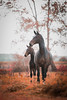 (Ines.Tassez Photographie) Tags: horses horselover hh horseriding horse equitation equestrian equinephotography nature naturelover nikon nikond800