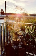 My little dragon (regulaköfer) Tags: dragon littledragon dragoninthemorningsun