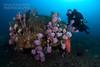 Other sponges at Bypass Reef (Nicolas & Léna REMY) Tags: nsw marinelife nauticam bypassreef rebreather sponge australia revo wildlife ocean sydney underwater inon pacificocean diving mer photography plongée recycleur scuba sea wild éponge