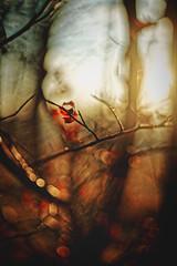 #167 - At sunset / Při západu (photo.by.DK) Tags: bokeh bokehlicious oldlens legacylens manuallens manualfocus manual manualondigital artbydk photobydk beyondbokeh woods forest sunshine flare lensflare planar planar50 planar5018 50mm rolleiplanar5018 rollei qbm carlzeiss zeiss sonya7 sonyilce sony sonya7ii sonyalpha shotwideopen wideopen hft rolleihft