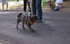 Dog on the Move (Meleager) Tags: nikon f5 film cheap walgreens richmon virginia art park byrd festival 35mm