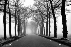 The road ahead is empty (Bianca Valkenier Photography) Tags: foggy foggylandscape trees landscape road december season bw blackandwhite nature fog misty thenetherlands dodewaard guelders gelderland nederland natuur landschap straat mistig mist mistiglandschap zwartwit monochrome hemmen overbetuwe