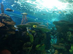 As if on a reef #toronto #ripleysaquarium #aquarium #fish #coralreef #latergram (randyfmcdonald) Tags: fish ripleysaquarium latergram coralreef aquarium toronto