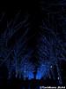 aonodokutsu004 (et_dslr_photo) Tags: xmas illumination 青の洞窟 shibuya yoyogi blueled night nightview nightshot hdr