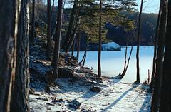 Frozen Lake (Atle Kvia) Tags: 35mm film portra400 nikon f80 n80 lake water frozen ice winter trees shadows morning snow plustek 8100
