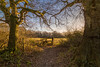 Oak couple (Nimbus20) Tags: oak tree holdhands sussex golden afternoon skies bue winter sunshine england