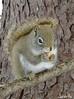 (Sarah-Vie) Tags: img4030 écureuil animal faune