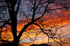 Sunset Silhouette (Let Ideas Compete) Tags: tree winter december sunset clouds sky dusk dazzling branches limbs leafless leaflesstree nakedtree backlit sunlight weather spectral orange red cloud sunsetsilhouette fractal color colorful evening mountaintop skyline fractured fracturedsunset throughthetree throughatree colorpalette