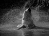 Black and white, playtime spin. (pitkin9) Tags: animal polarbear ursusmaritimus projectpolarbear playing playtime toy blackandwhite yorkshirewildlifepark doncaster england