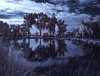 An Infrared Look At Santee Lakes (Bill Gracey 17 Million Views) Tags: infrared infraredphotography ir convertedinfraredcamera channelswapping nature naturalbeauty palmtrees santeelakes clouds sky water vegetation textures composition surreal