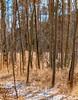 Winter's Beauty (Kuby!) Tags: kubitschek kuby nikon d300 december 2010 wikerson pass colorado co trees woods bare aurora 2018