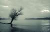 A breakwater (kalbasz) Tags: fujixt2 xf35f2 danube breakwater hungary outdoor river tree alone art cloud monocrome blackandwhite dunakeszi nature water elitegalleryaoi bestcapturesaoi aoi