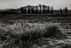 Riverbank (bertie.carter.photography) Tags: riverbank alfriston monochrome sussex dawn uk reeds treeline blackandwhite highcontrast contrast