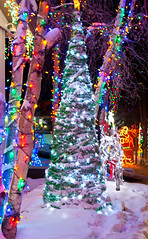 Everything gets Lighted (J.R. Rondeau) Tags: rondeau yellowknife nt christmaslights christmas christmasdecorations bokeh colours colors canoneos tamron2875 photoshopelements10