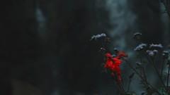 Sapa (dieforice) Tags: vietnam sapa flower waterfall mountain