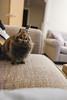 Cuddle time! Really? (garethottywill) Tags: fujinon16mmf14 fujifilmxt2 fuji fluffy rabbit rabbits cute