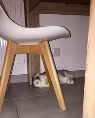 After a long day..... (gosselinclara) Tags: home sud south france cute amour love rabbit lapin bunny relax dormir sleep mayo