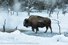 Yellowstone (kiwigran) Tags: wyoming yellowstone jacksonhole winter snow