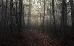 Eifel Lights (Netsrak) Tags: baum bäume eifel europa europe herbst landschaft natur nebel wald autumn fall fog landscape mist nature woods